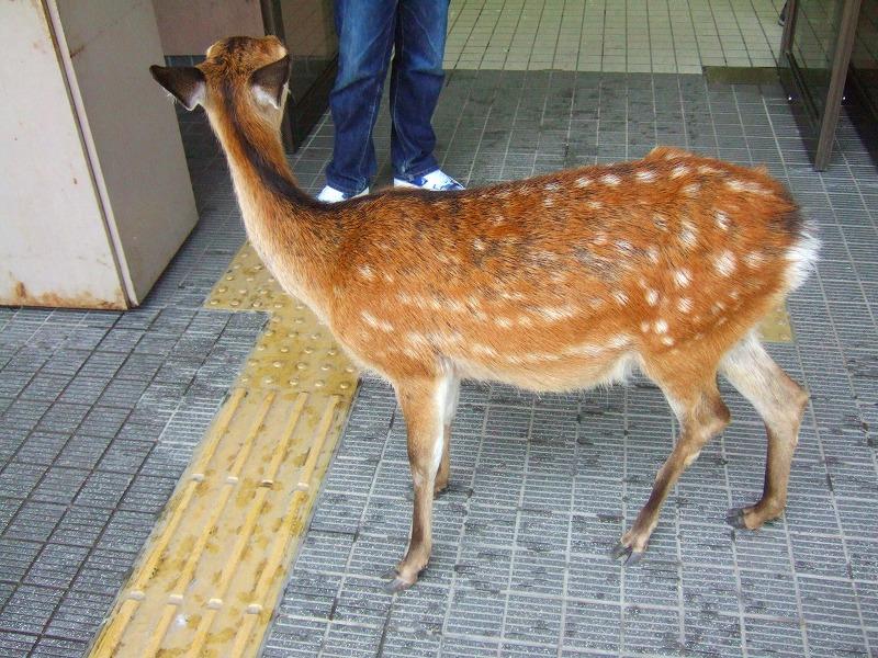 HIROSHIMA2005_0103019.jpg